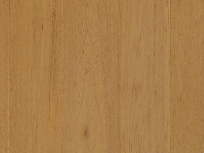 栎木-DR096